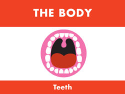 My Body - Teeth
